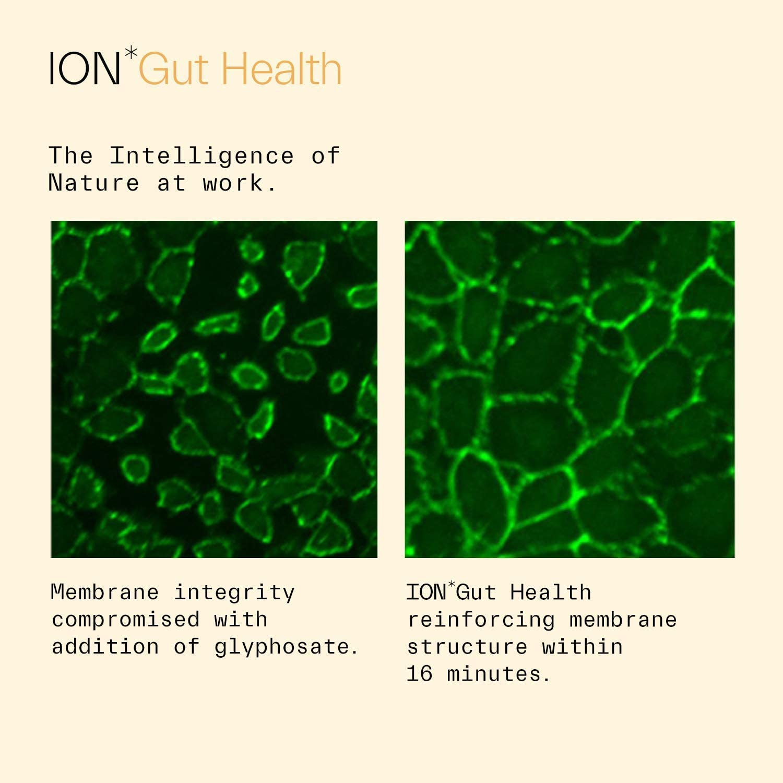 ION Gut Health - 32 oz